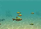 Balık Yeme Oyunu